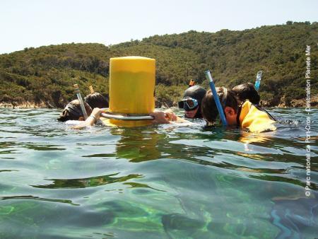 Découverte du monde marin de la Méditerrannée avec 7 sentiers sous-marins